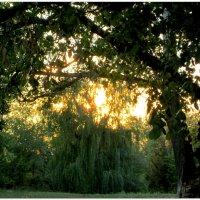 Закат в монастырском урочище... :: Тамара (st.tamara)