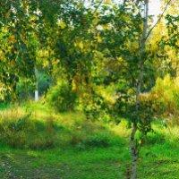 Джунгли парка Кирова в городе Рубцовск, Алтайский край, Россия :: Grishkov S.M.