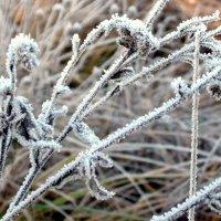Первое дыхание зимы. :: Маргарита ( Марта ) Дрожжина