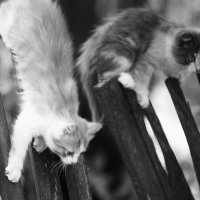 игры котят 3 :: Вадим Виловатый