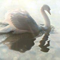 Царицынский лебедь :: Olenka