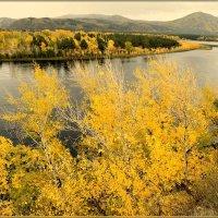Золотая осень за рекою....  Деревьев наряд огневой :: galina tihonova