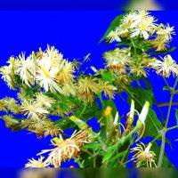 Цветущая трава и ветер :: Владимир Хатмулин