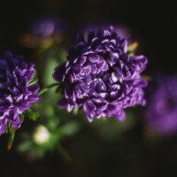 Цветы :: Андрей Косых