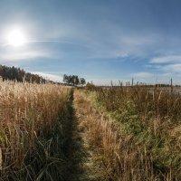 в поле :: Дамир Белоколенко