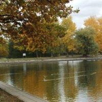Осенний пруд :: Наталья Александрова