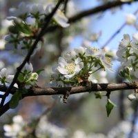 весна :: Константин Нестеров