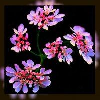 Цветы и ветер 3 :: Владимир Хатмулин