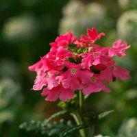 Красный цветочек :: Дмитрий Зубенин