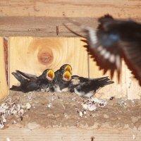 Ласточкино гнездо :: Владимир Ворончихин