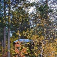Тайны осеннего леса :: Ольга