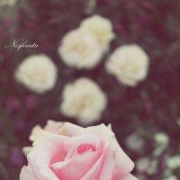 Розы 2 :: Nosferatu V.