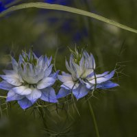 цветы :: Надежда Гончар
