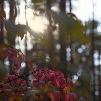 Рябиновые листья :: sorovey Sol