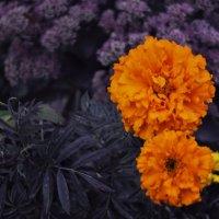 Цветы :: Елена Евстигнеева