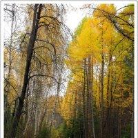 Осенняя прогулка :: muh5257
