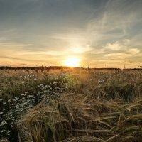 Летний закат :: Александр Лебедев