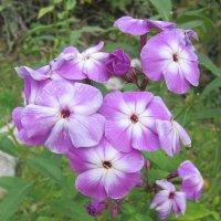 Последний раз цветут цветы ..осень. :: Мила Бовкун