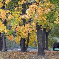 Под сенью осенней листвы. :: Oleg4618 Шутченко