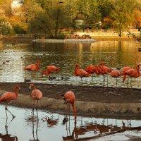 фламинго :: Саша Ш.