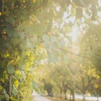 Осень в городе :: Арина Нескажу