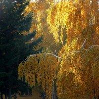 Солнца луч :: Виктор Четошников