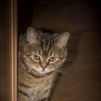 Явление кота :: Elena Ignatova