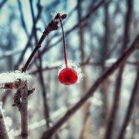 Первое дыхание зимы :: Максим Дорофеев