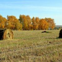 Отдыхающее поле :: Татьяна Лютаева