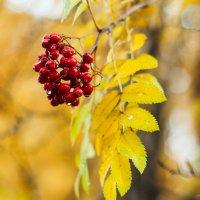 Осень :: Sergey