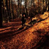 Блики света. :: Yoris2012 Lp.,by >hbq/