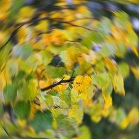 Осенний круговорот.... :: Tatiana Markova
