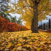 Осень :: Марк Э