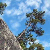 И на камнях растут деревья... :: Николай