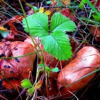 первые грибы... :: Светлана Попова