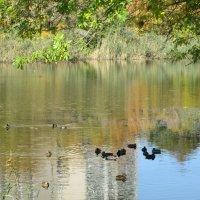 В городе пруд с дикими утками... :: Тамара (st.tamara)