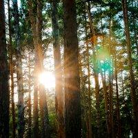 Прогулка по лесу :: Сергей Бородулин