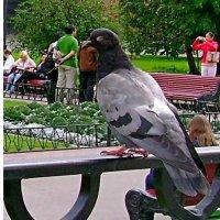 Смотрящий по парку :: Григорий Кучушев