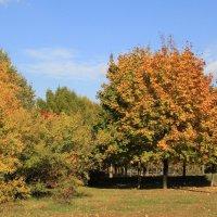 Осень бывает настолько красивой, что воспоминание о ней сглаживает суровость зимы. :: Dashiki