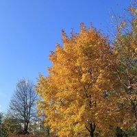 Весна опоздала…Лето опоздало…А осень — пунктуальная сволочь! :: Dashiki