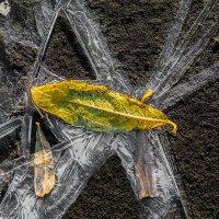 В ледяной сети... :: Денис Антонов