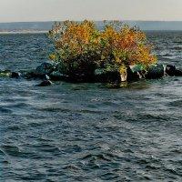 Чайкин остров :: Юрий Муханов
