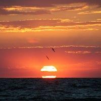 Закат и птицы :: Сергей