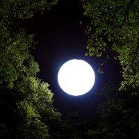 Фонарь и луна :: михаил кибирев