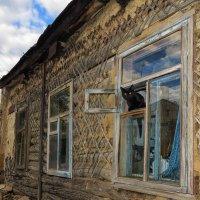 кошка в окошке :: Василий Алехин
