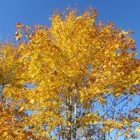 Золотая осень :: BoxerMak Mak