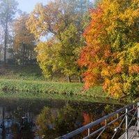 Осенний пруд :: Сергей Залаутдинов