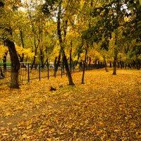 Осень :: Саша Ш.