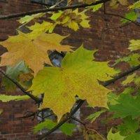 Осенние листья. :: ТАТЬЯНА (tatik)