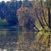 Эта теплая винная осень опьяняет своей красотой!.. :: Ольга Русанова (olg-rusanowa2010)
